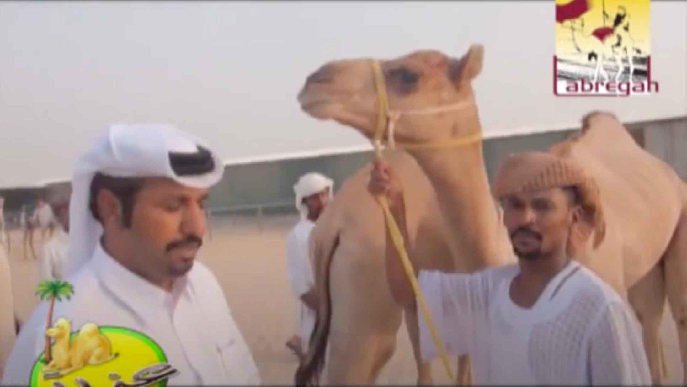 عزبة/ حمد بن محمد بن جهويل المري