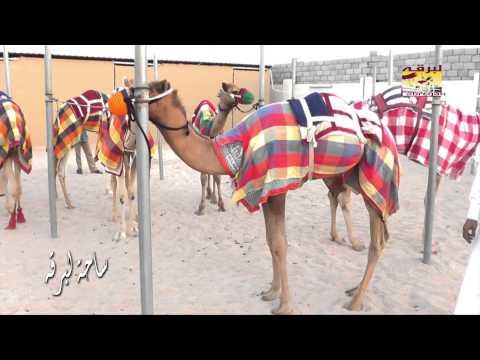 حلقة خاصة مع السيد/ محمد بن ظافر الهاجري – عضو المجلس البلدي عن منطقة الشحانية 20-5-2013