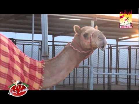 عزبة/ ناصر بن محمد بن حباب الهاجري