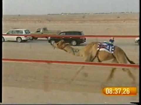 كيف لـ راشد حمد راشد غدير – مهرجان درهام التحدي 20/5/2008 – الشلفة الفضية حيل قبائل 16:46:12