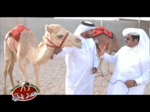 عزبة / سعيد بن محمد السومالي