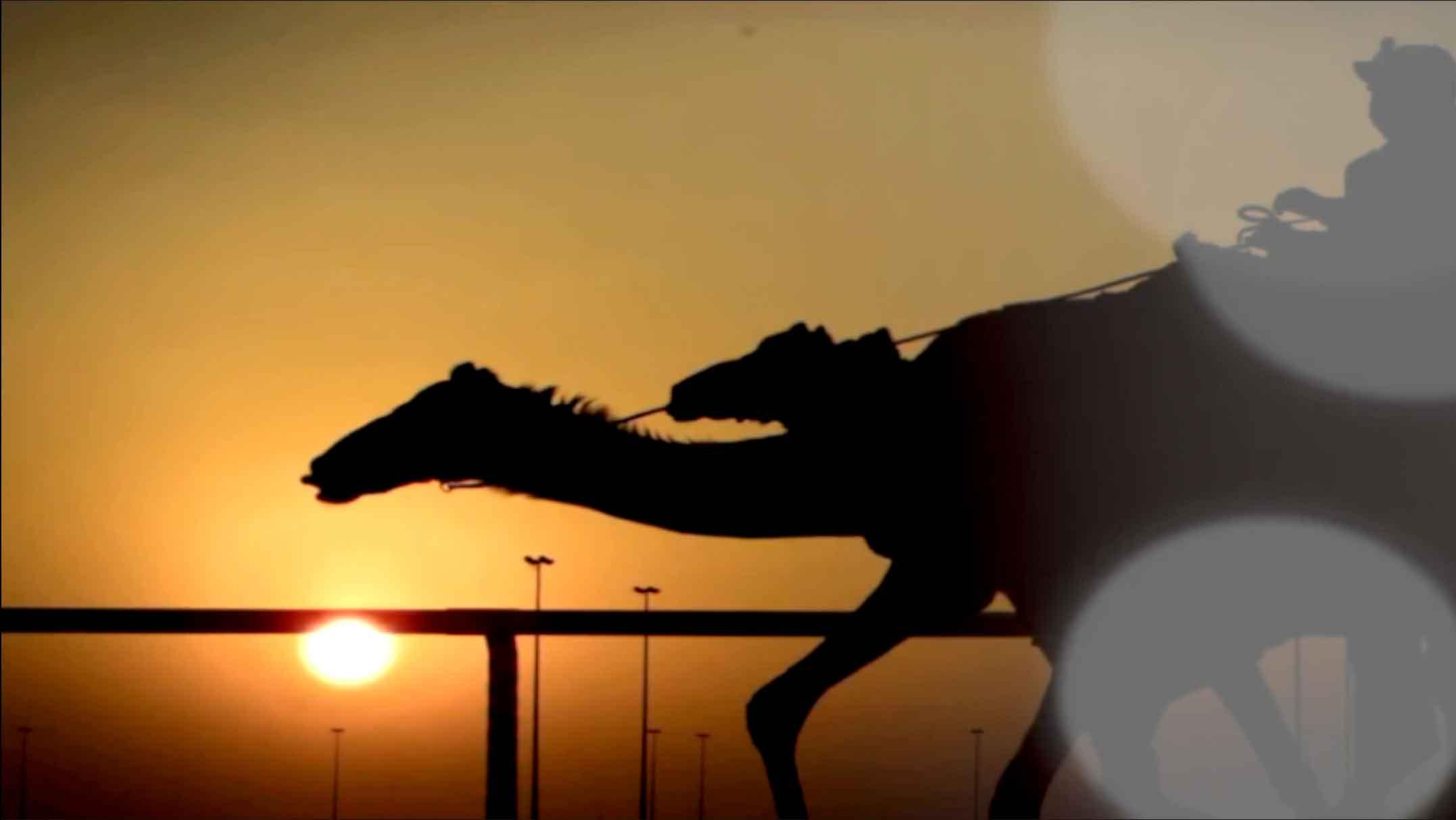 ملخص السباق الختامي للحيل والزمول (لأصحاب السمو الشيوخ) بمهرجان ختامي المرموم ١٢-٤-٢٠٢١
